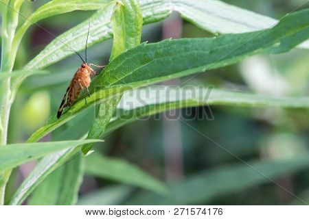 Large insect sitting on a long slender green leaf