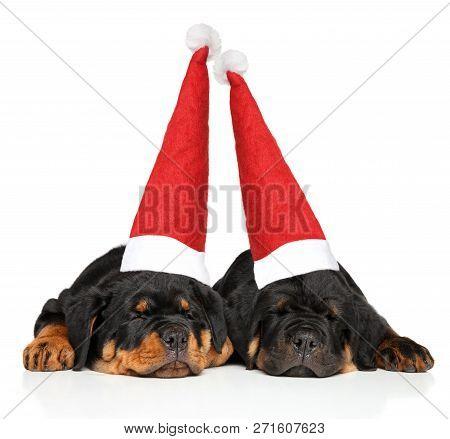 Rottweiler Puppies In Santa Cap Sleeping On White Background. Christmas Animals Theme