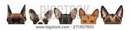 Group Of Dog Puppies Half-face, Front View. Isolated On White Background. Baby Animal Theme