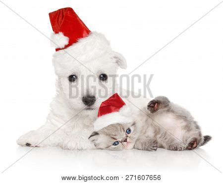 Puppy And Kitten In Santa Red Cap On A White Background. Christmas Animals Theme