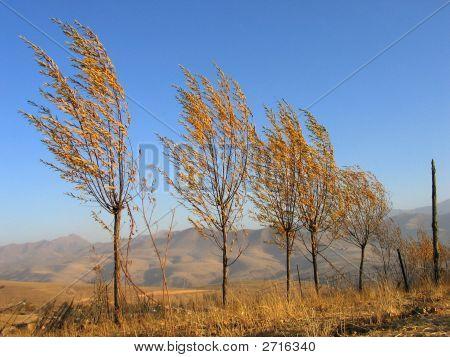 Bäume und Wind