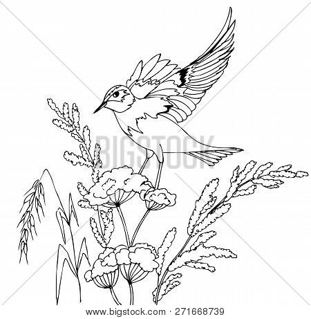 Bird Sitting On A Plant. Hand Drawn Illustrations For Coloring