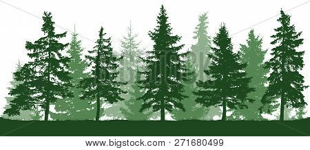 Seamless Forest Fir Trees Silhouette. Christmas Tree. Parkland, Park, Garden. Coniferous Green Spruc