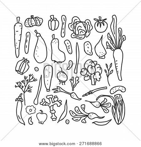 Set Of Vector Sketch Vegetables. Collection Of Veg In Doodle Style Isolated On White Background. Col