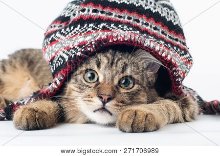 Mixed Breed Cat In Christmas Hat On White Background