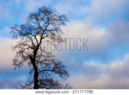 Tree with fallen leaves against the blue sky
