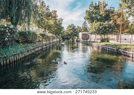 Ducks In The Pond, Clear Transparent Water - Urban Pond