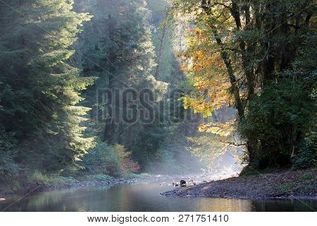 Evening Light Filters Through Autumn Leaves As Its Rays Shine Over Salmon River.