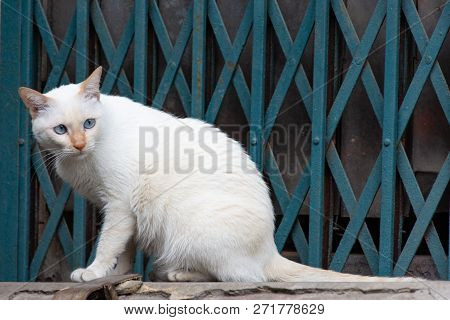 White Cat With Stunning Blue Eyes Sitting Onto Wall In Front Of A Grid