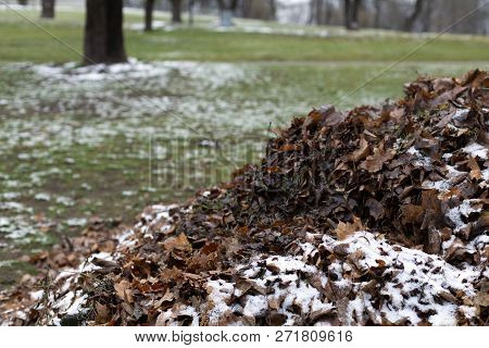 A Heap Of Fallen Dry Leaves Dry Under First Snow In The Park