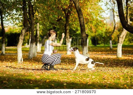 Girl In Black And White Clothes With Black And White Stafford Sitting On The Ground At Park Outdoor