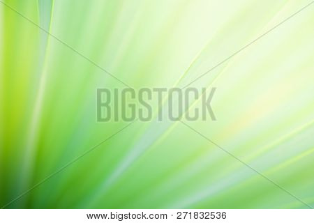 Close Up Natural View Of  Green Leaf On Greenery Blurred Background In Garden On Morning Time With S