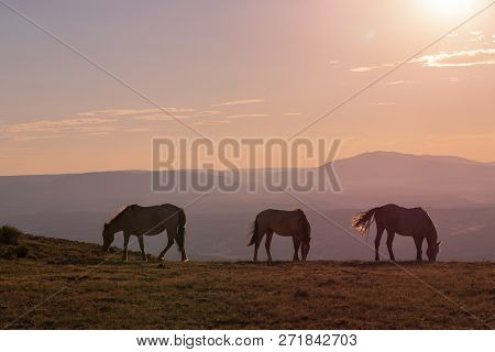 Wild Horses Silhouetted At Sunset In The High Desert