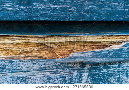 Damaged Splintered Wood In The Color Blue In Macro Closeup, A Natural Wooden Background Texture.