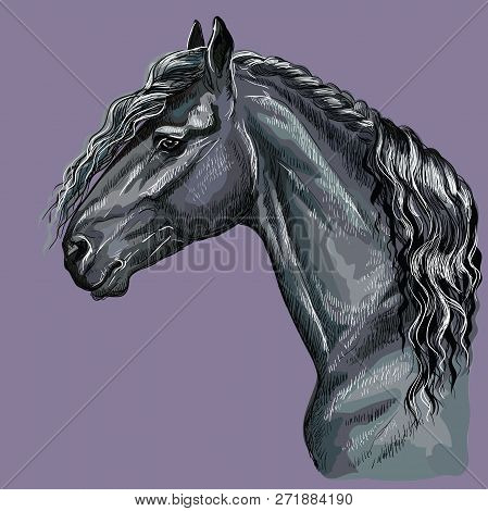 Colorful Hand Drawing Portrait Of Friesian Horse. Horse Head  In Profile Isolated Vector Hand Drawin