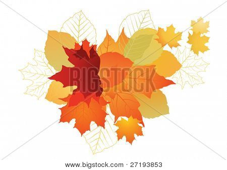 Vector illustration of autumn leafs for background.