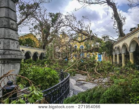 The Huge Trees Uprooted