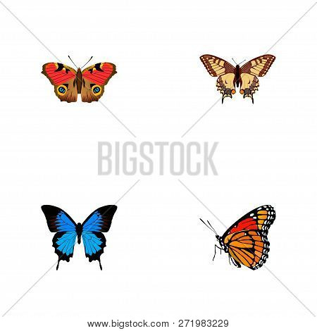 Set Of Butterfly Realistic Symbols With Painted Lady, Polyommatus Icarus, Precis Almana And Other Ic