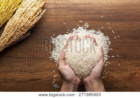 Top View Of Jasmine Rice Holding In Hands On Dark Wooden Table With Rice Plants, Ear Of Rices With J