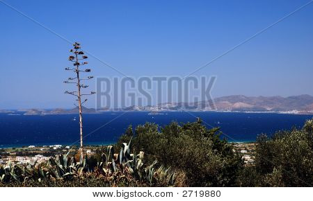 Greece And Agave