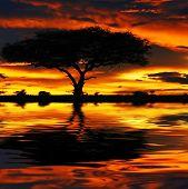 Tree silhouette and dramatic sunset. Africa. Kenya. Masai Mara. poster