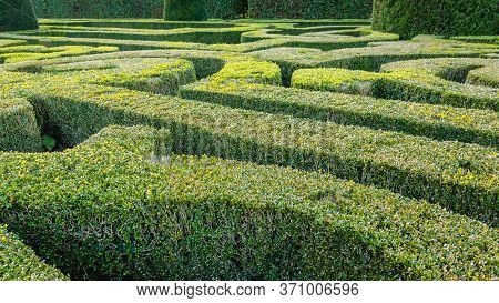 Natural Hedge Labyrinth Or Maze In A Formal Castle Garden