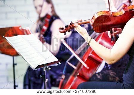 Violin Player Musician