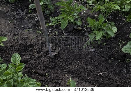 Work In The Garden. Hand With A Hoe. Plant Vegetables. Hard, Dirty Work. Village, Land. Farming Conc
