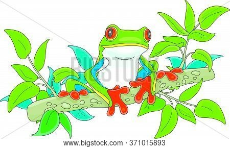 Funny Colorful And Poisonous Tree Frog Sitting On A Green Branch In A Wild Tropical Jungle, Vector C