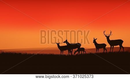 Herd Of Wild Deer And Baby Fawn Grazing At Sunset Meadow With Dramatic Orange Sunset Sky - Wildlife