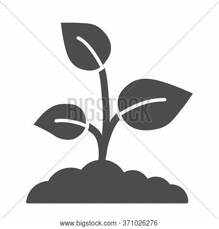 Young Growth With Three Leaves Solid Icon, Nature Concept, Sprout Symbol On White Background, Growin