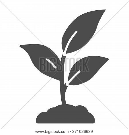 Plant Sprouts With Three Leaves Solid Icon, Gardening Concept, Young Growth Sign On White Background