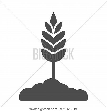 Wheat Spikelet Solid Icon, Organic Concept, Sign On White Background, Wheat Ear Icon In Glyph Style