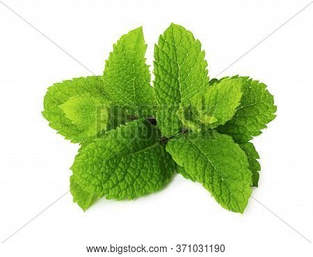 Fresh Peppermint Isolated On White Background. Mint Leaves