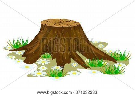 Tree Stump Isolated On White Background. Big Old Tree Stump With Roots, Grass And Flowers. Cartoon B