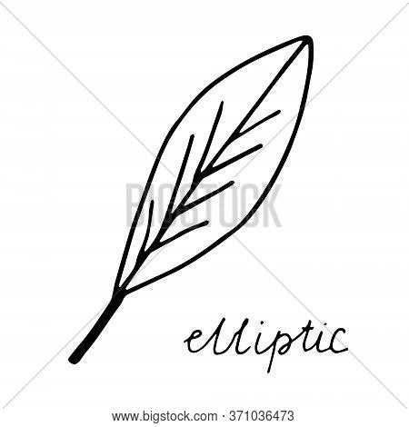 Hand Drawn Doodle Leaf. Black Shape With Different Forms. Elliptic Leaf Shape. Birch, Aspen. Vector