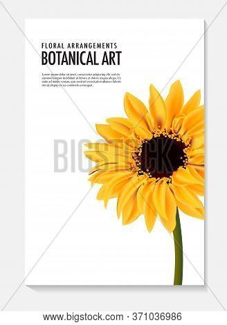 Sunflower Vector Realistic Illustration Isolated On White. Daisy Yellow Sun Flower Summer Vibrant Ar