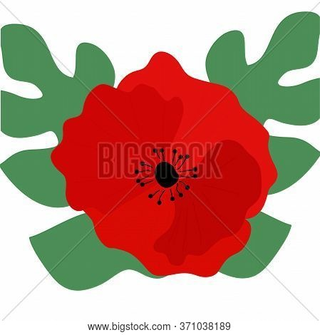 Flower Red Poppies Papaver Rhoeas, Common Names: Corn Poppy, Corn Rose, Field Poppy, Red Weed On A W