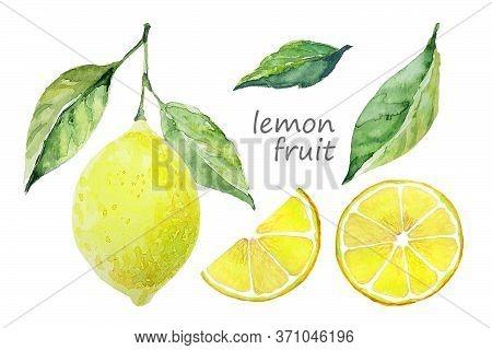 Watercolor Lemon Fruit Set. White Background. Fresh Fruit. Lemon Tree Fruits And Leaves. Collection