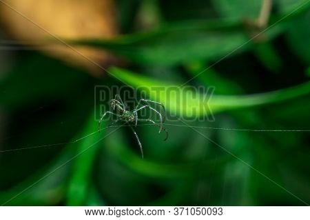 A Tiny Green Spider Is Creating Its Web