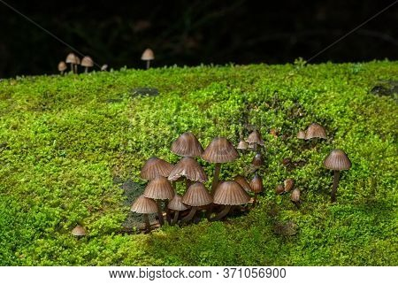 A Bunch Of Brown Toadstools On The Green Moss Covered Trunk Of A Fallen Tree