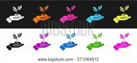 Set Plant In Hand Of Environmental Protection Icon Isolated On Black And White Background. Seed And