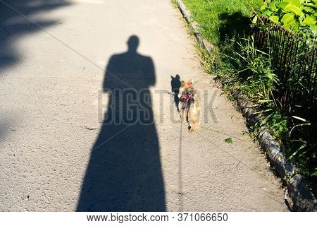 Shadow Walks With A Dog On A Leash.shadow Walks With A Dog On A Leash.
