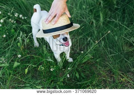 Happy Puppy Jack Russell Terrier And His Owner Playing With Strow Hat In The Summer Meadow. Dark Gre