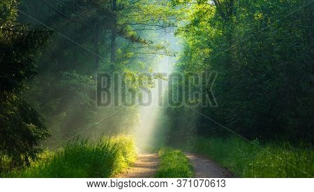 Green Forest Sunlight. Bright Sun Rays In Forest Shining On Path Through Green Trees. Amazing Summer
