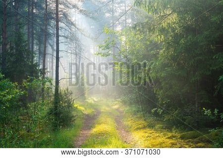 Green Sunny Forest. Sunbeams In Forest With Path. Scenic Woodland In Morning Sunlight. Green Trees A
