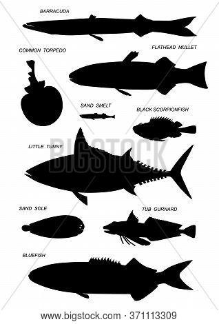Different Sea Fish. Black Silhouette Vector Illustratuin Collection.