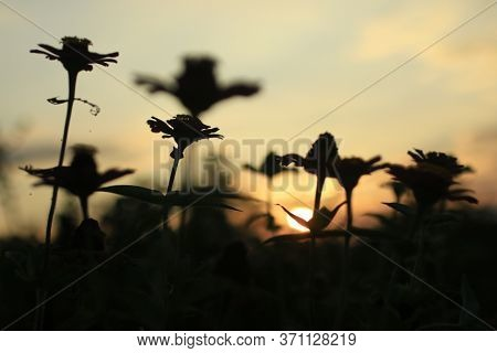 Abstract Nature Background. Natural Abstract Background With The Sunset Behind The Flower Plant Silh