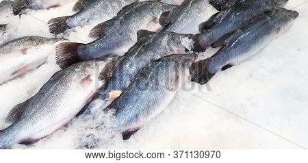 Many Fresh Asian Sea Bass, Latidae Or Barramundi Fish Freezing On Ice For Sale At Seafood Market Or