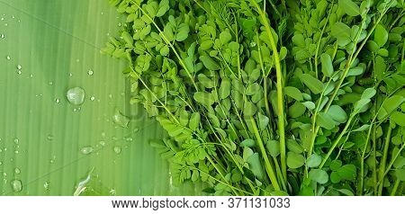 Moringa Tree Leaves, Horse Radish Tree Or Drumstick On Banana Leaf And Water Droplet With Left Copy
